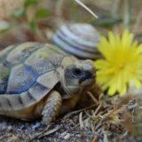 piccolo_tartaruga_terrestre